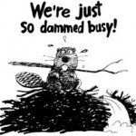 Dammed Busy